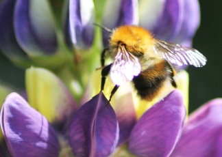 bee from back cropped