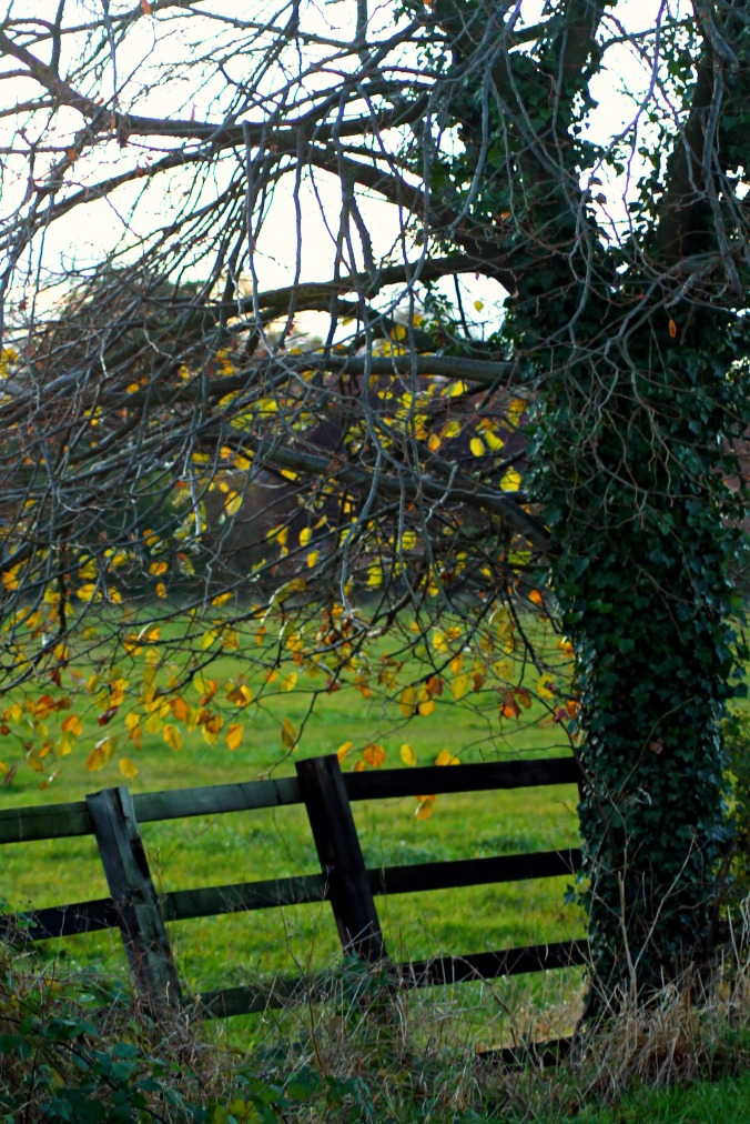 Fence with tree