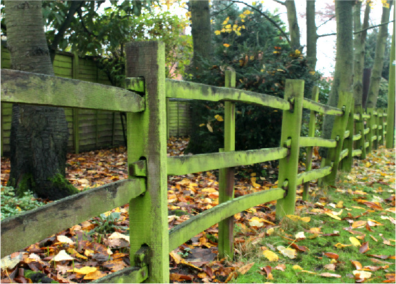 Mossy Fence