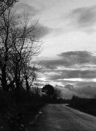 road with trees portrait cropped
