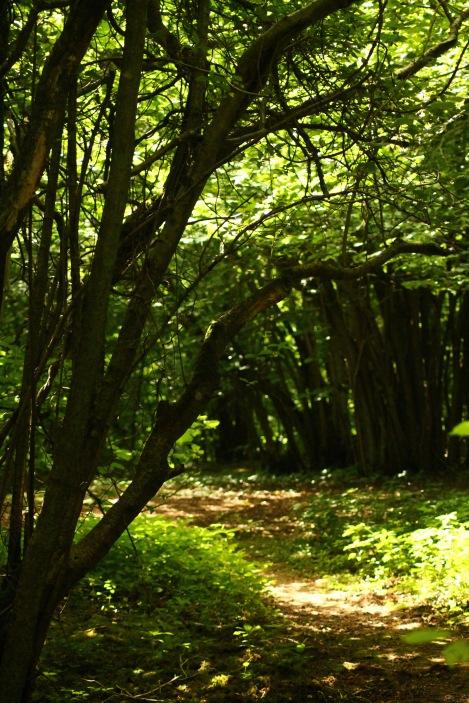 woodland path bright