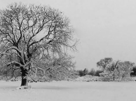 wintry scene b and w