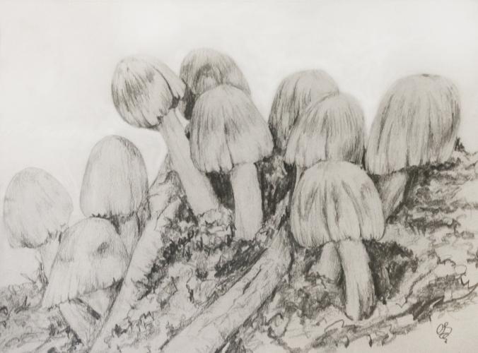 ink caps sketch