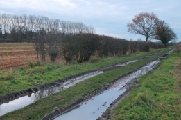 puddled path