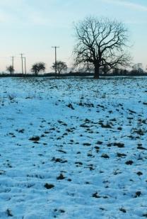 snowy field with tree