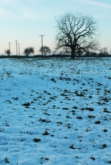 snowy field with tree