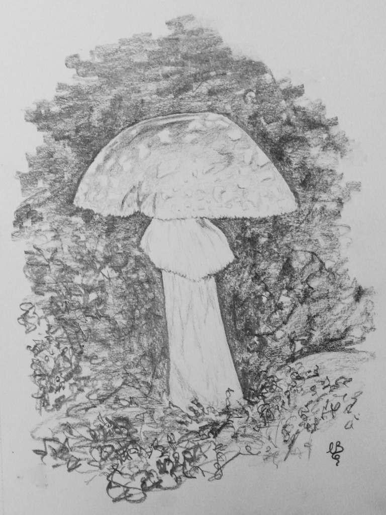 toadstool sketch