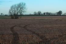 tractor tracks landscape