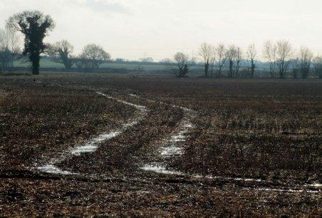 field with snowy tracks