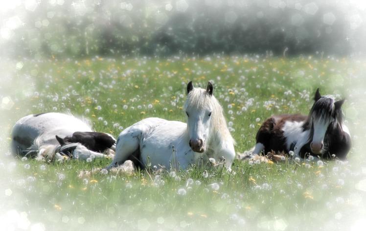 Ponies week 2