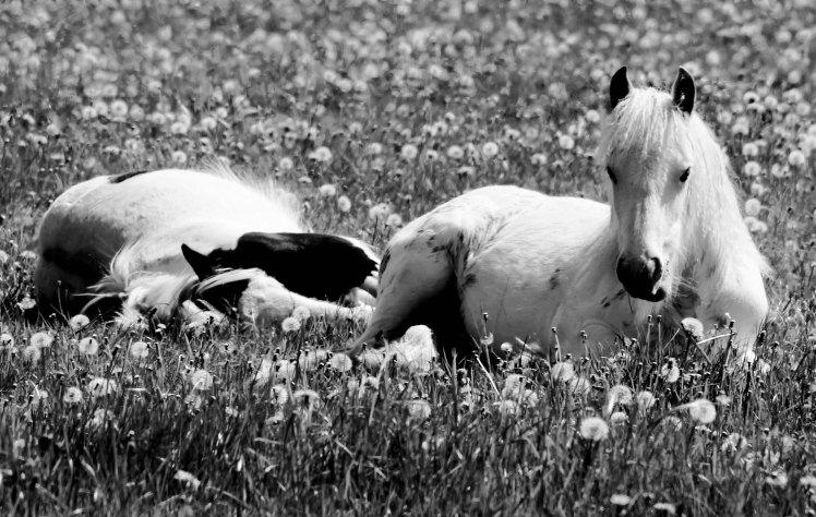 Ponies week 3.2