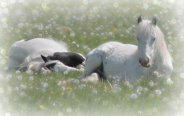 Ponies week 4.4