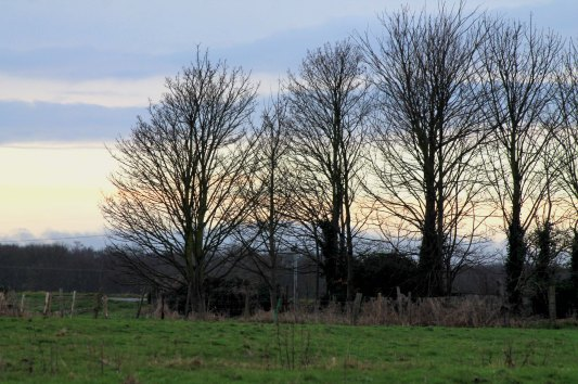 trees with sky
