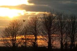 golden sunset with bird