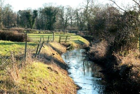stream landscape
