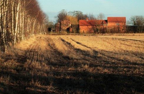 tree line to farm