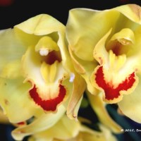 MFtS: Memories of Orchids