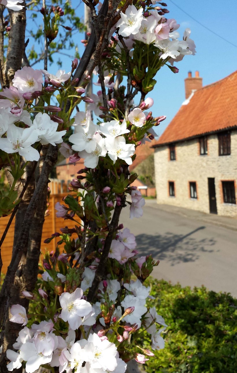 house with blossom