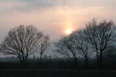 morning sun through trees
