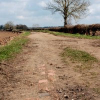 Cee's Which Way Challenge 2015: Week #14 - The Brick Lined Path