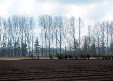 ploughed field with tree line