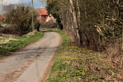 road with celandines