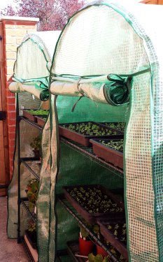 Seedlings in growhouses