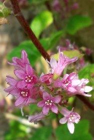 Shrub in blossom