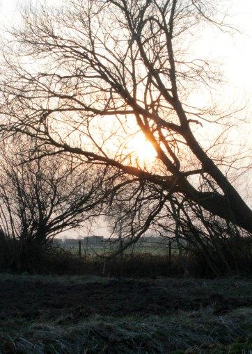 morning sun through tree