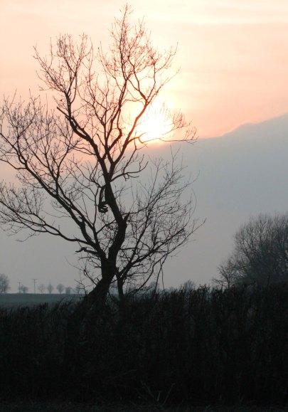 morning sun through tree2