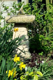 Daffodils with sundial