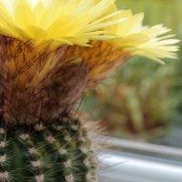 Cactus Crazy