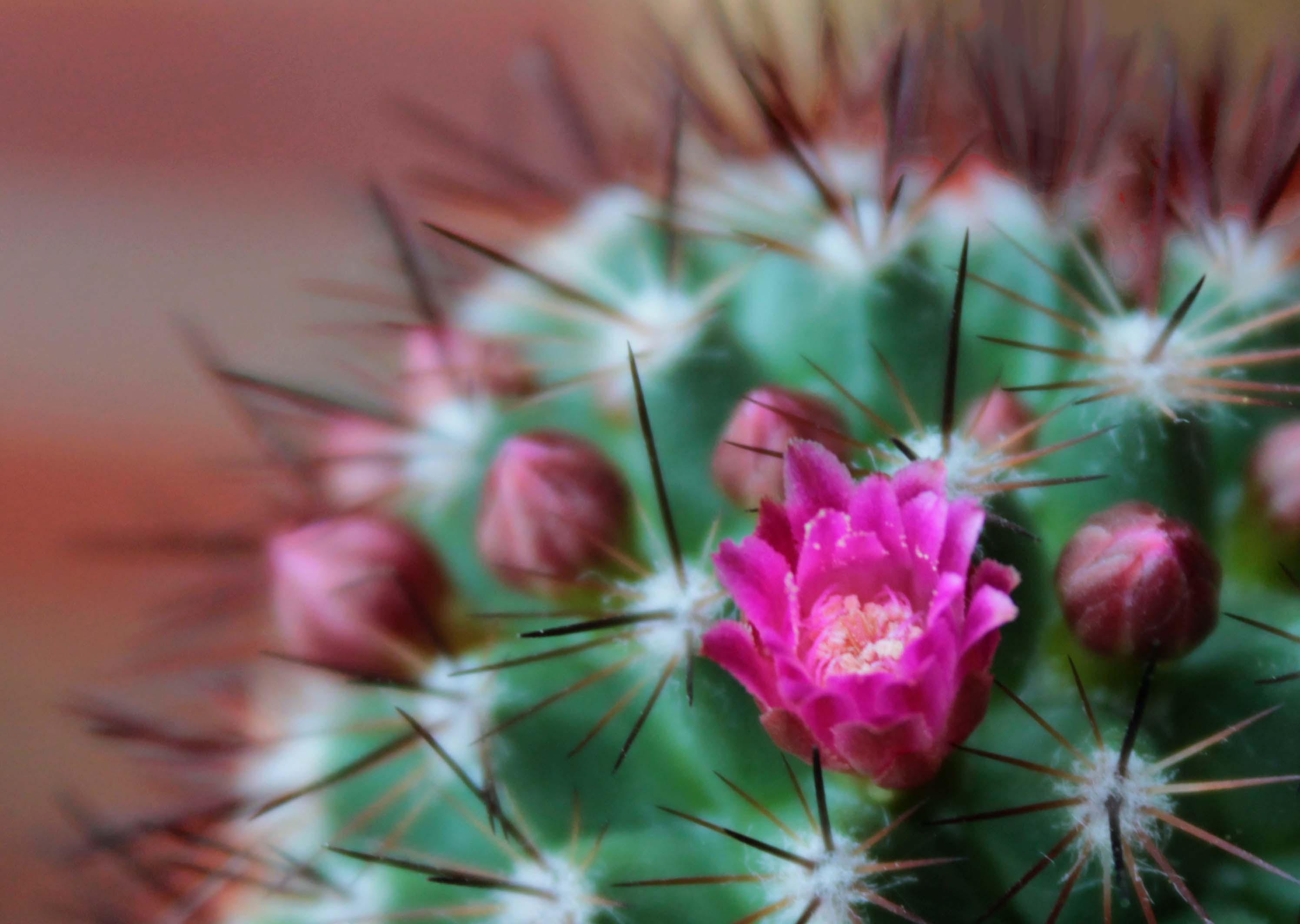 Cactus Crazy An Enchanted Place