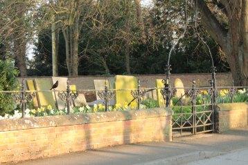 daffodil graveyard with blackbird
