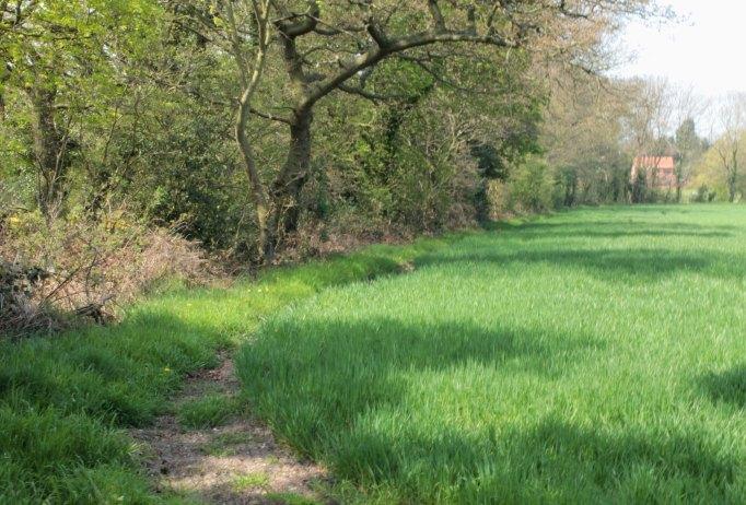 path by field