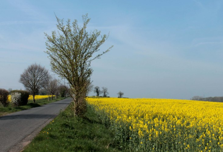 road with oilseed rape
