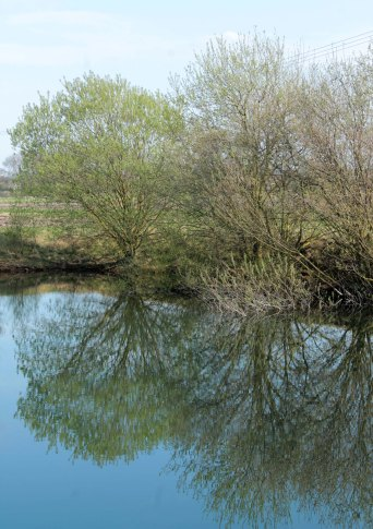 tree reflection in pond