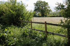 fence by wildflower meadow