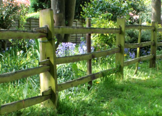 Fence with bluebells