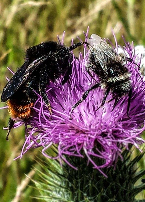 Bee Pair2