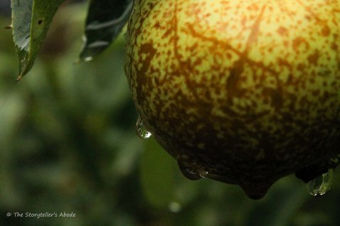 droplets on pear