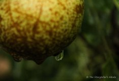 droplets on pear2