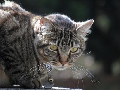 kitten-934820_640