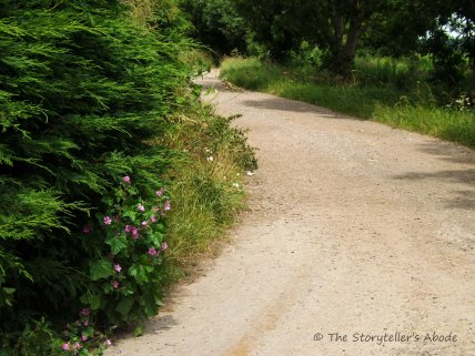 path with flowers