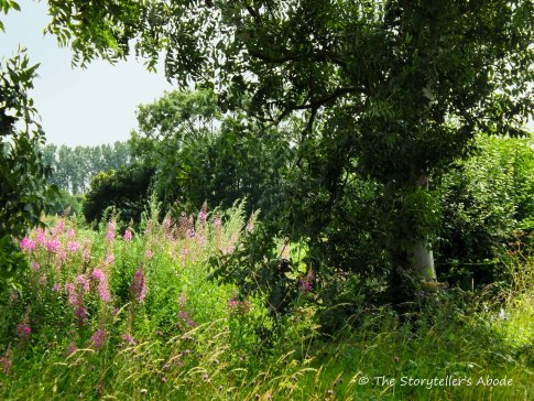 tree with rosebay willowherb
