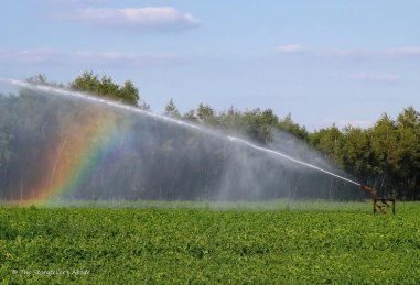 watering system with rainbow