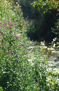wildflowers by stream
