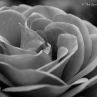 Cee's Black and White Challenge: What is Beautiful to You
