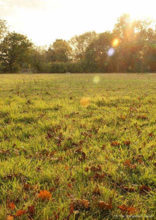 sunbeam over meadow edited