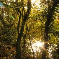 Wordless Wednesday: Sunlit Stream